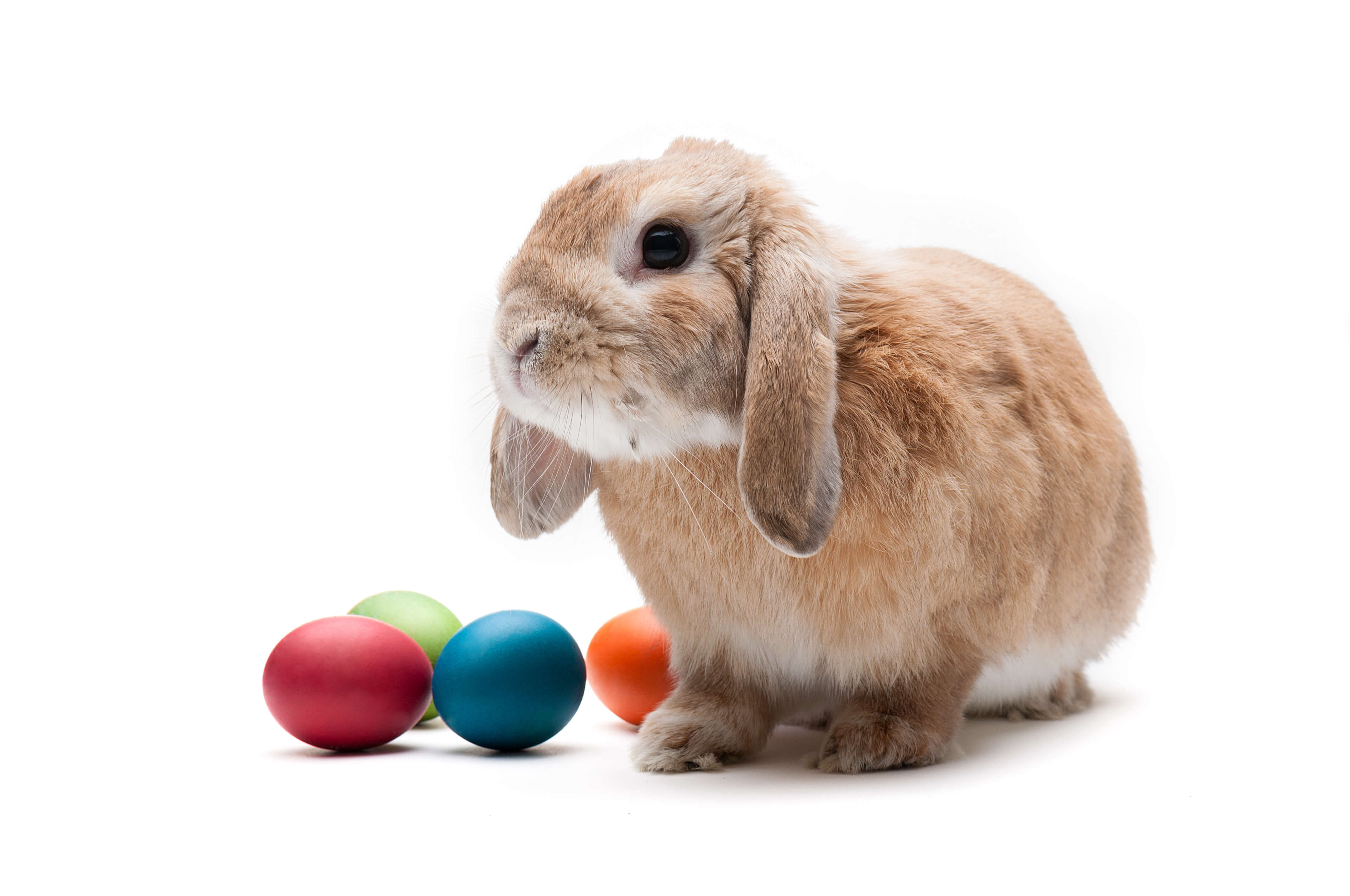 What came first the rabbit or the egg?